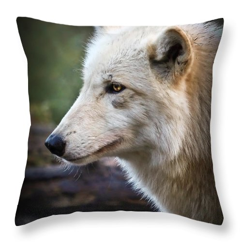 Wolves Throw Pillow featuring the photograph Grey Wolf by Athena Mckinzie