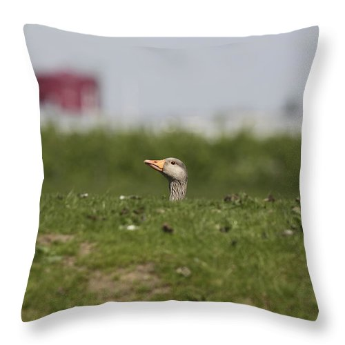 Greylag Goose Throw Pillow featuring the photograph Greylag Goose Sticks Its Head Above The Dike by Ronald Jansen