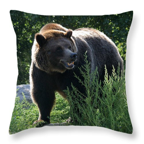 Animal Throw Pillow featuring the photograph Grizzly-7759 by Gary Gingrich Galleries