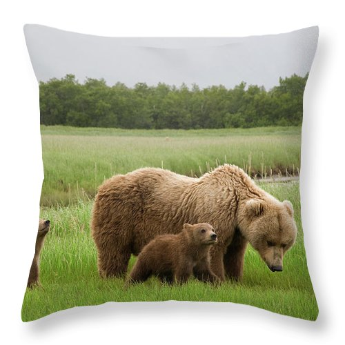 Mp Throw Pillow featuring the photograph Grizzly Bear With Spring Cubs by Matthias Breiter