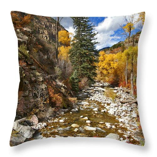 Grizzly Creek Throw Pillow featuring the photograph Grizzly Creek Cottonwoods Vertical by Jeremy Rhoades