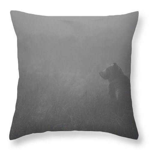 Grizzly Bear Throw Pillow featuring the photograph Grizzly In Fog by Max Waugh