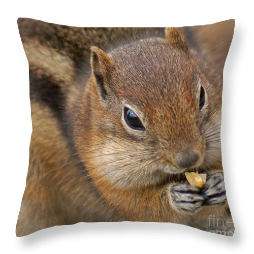 Ground Squirrel Throw Pillow featuring the photograph Ground Squirrel by Heather Coen