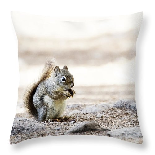 Photography Throw Pillow featuring the photograph Ground Squirrel by Ivy Ho