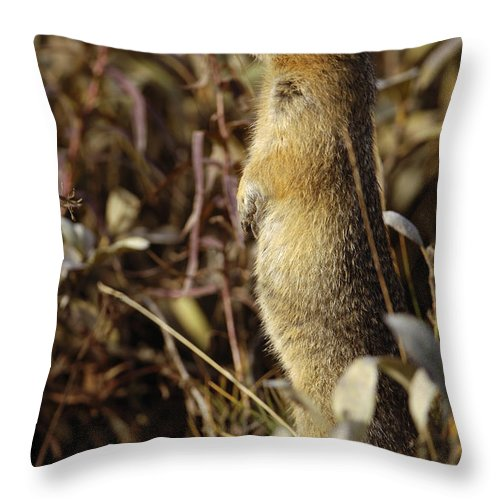Arctic Ground Squirrel Throw Pillow featuring the photograph Ground Squirrel by John Shaw