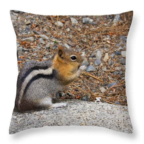 Golden-mantled Ground Squirrel Throw Pillow featuring the photograph Ground Squirrel by Melinda Fawver