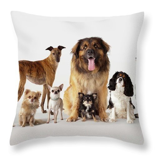 Pets Throw Pillow featuring the photograph Group Portrait Of Dogs by Compassionate Eye Foundation/david Leahy