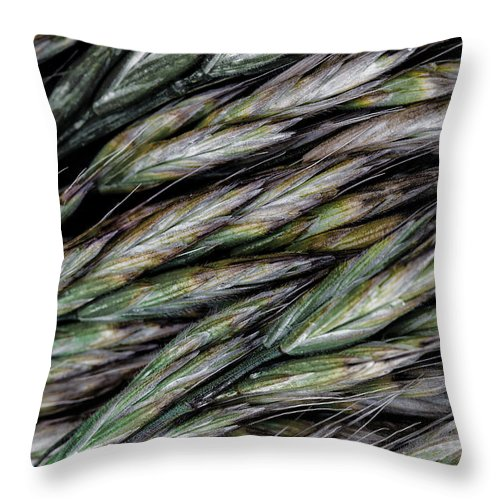 Herbs Throw Pillow featuring the photograph Growing by Edgar Laureano
