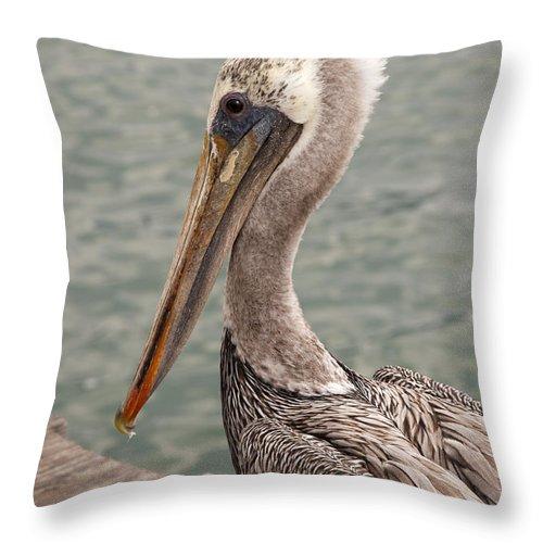 California Throw Pillow featuring the photograph Guardian Pelican by Brenda Kean
