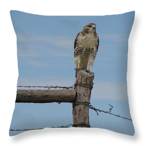 Fence Throw Pillow featuring the photograph Guarding The Prairie by Mary Christian Stewart