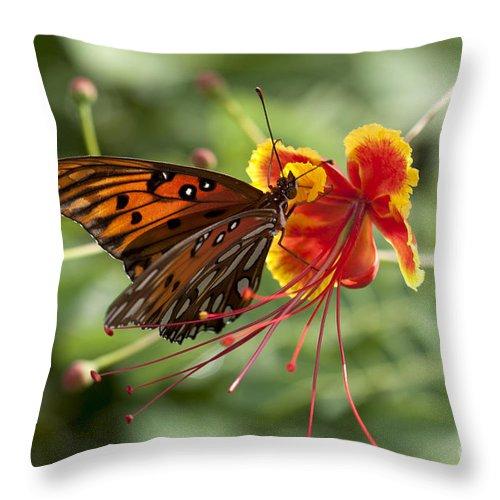Gulf Fritillary Throw Pillow featuring the photograph Gulf Fritillary Photo by Meg Rousher
