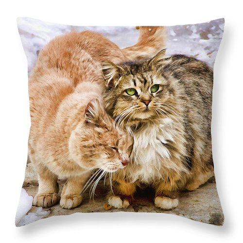 Cats Throw Pillow featuring the photograph Gutter Kitties Five by Alice Gipson