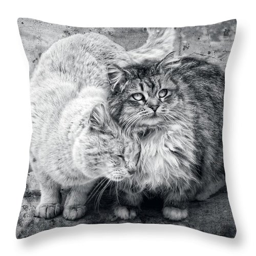 Cats Throw Pillow featuring the photograph Gutter Kitties Nine by Alice Gipson
