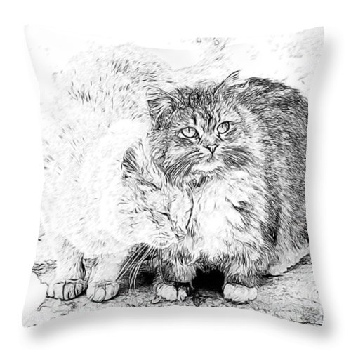 Cats Throw Pillow featuring the photograph Gutter Kitties Seven by Alice Gipson
