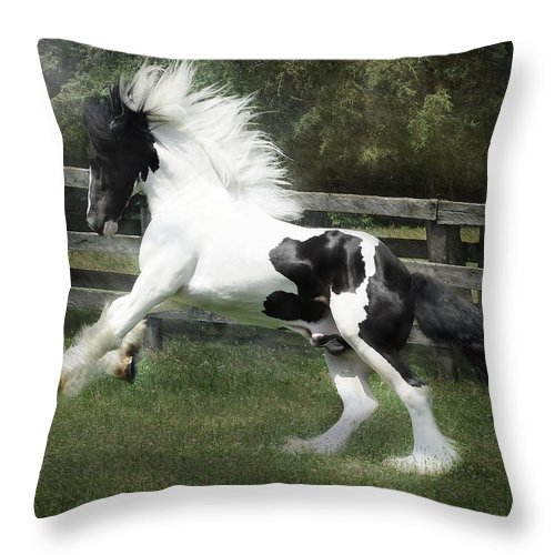 Gypsy Horses Throw Pillow featuring the photograph Gypsy Morning Mist by Fran J Scott