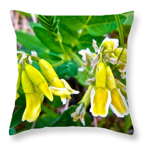 Hairy Arctic Milk Vetch Near Savage River Ranger Cabin In Denali Np Throw Pillow featuring the photograph Hairy Arctic Milk Vetch Near Savage River Cabin In Denali Np-ak by Ruth Hager