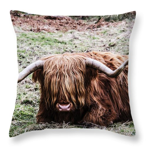 Travel Throw Pillow featuring the photograph Hairy Cow by Elvis Vaughn