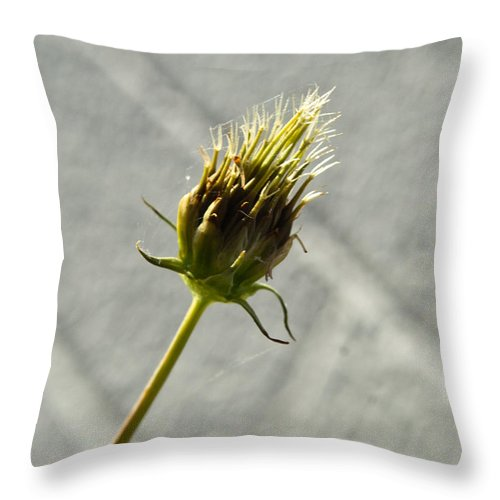 Hairy Throw Pillow featuring the photograph Hairy Plant Seed Pod 3 by Douglas Barnett
