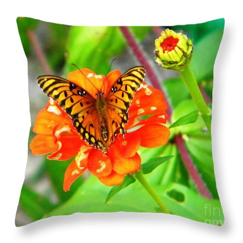 Butterfly Throw Pillow featuring the photograph Halloween Orange by Matthew Seufer