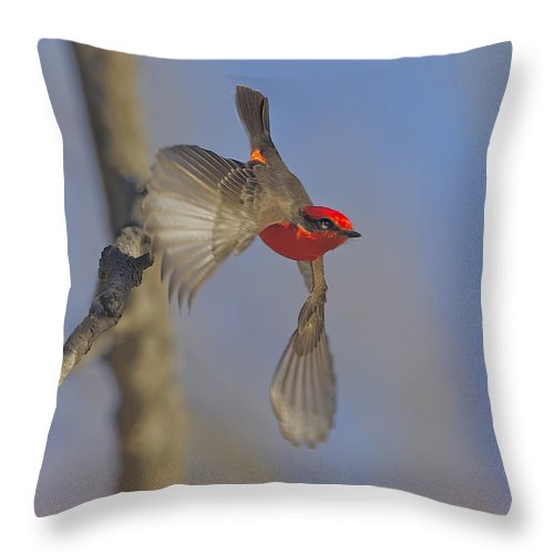 Bird Throw Pillow featuring the photograph Handsome Vermillion Off The Limb by Leslie Reagan - Joy To The Wild Photos