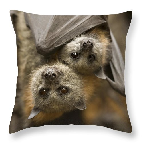 Bats Throw Pillow featuring the photograph Hang In There by Mike Dawson