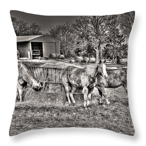 Hangin' With My Homies Throw Pillow featuring the photograph Hangin' With My Homies by William Fields