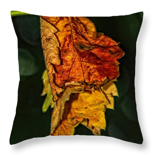 Fall Throw Pillow featuring the photograph Hanging Gold by Lucy VanSwearingen