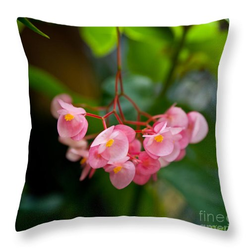 Pink Throw Pillow featuring the photograph Hanging In Pink by Michelle Wiarda-Constantine