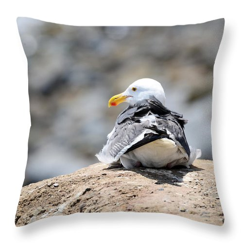 Bird Throw Pillow featuring the photograph Hanging Out by La Dolce Vita
