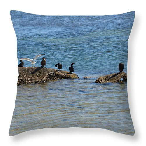 Florida Throw Pillow featuring the photograph Hanging Out by Linda Kerkau