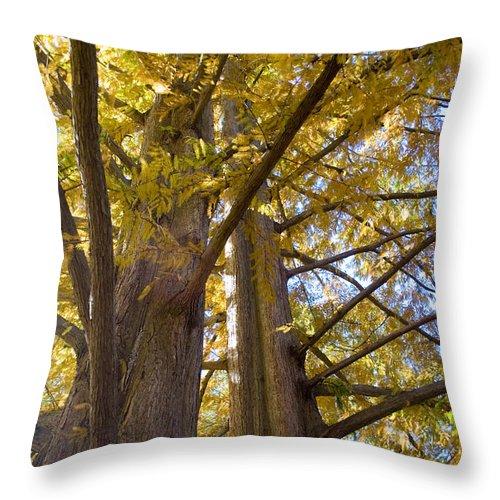 Fall Throw Pillow featuring the photograph Haphazard by Breanna Calkins
