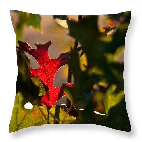 Happy Throw Pillow featuring the photograph Happy Being Me by Mark Alder