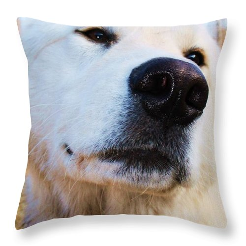 White Dog Throw Pillow featuring the photograph Happy Dog by Vicki Dreher