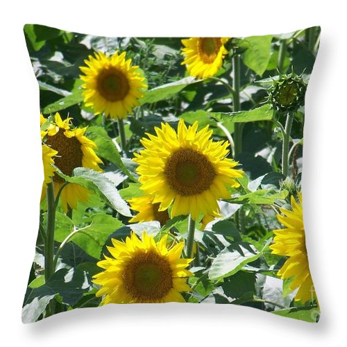 Sunflowers Throw Pillow featuring the photograph Happy Faces by Jackie Mueller-Jones