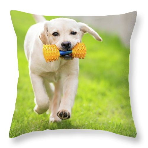 Pets Throw Pillow featuring the photograph Happy Hour by Stefan Cioata