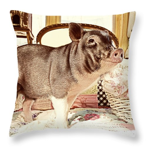 Pot Belly Pig Throw Pillow featuring the photograph Happy Pig by Susan Stone