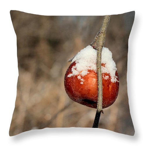 Apple Throw Pillow featuring the photograph Hard Cider by Carol Estes