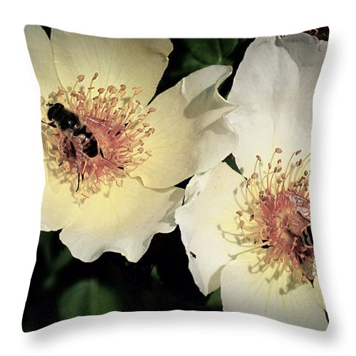 Hard Working Twins Throw Pillow featuring the photograph Hard Working Bee Twins by Susanne Van Hulst