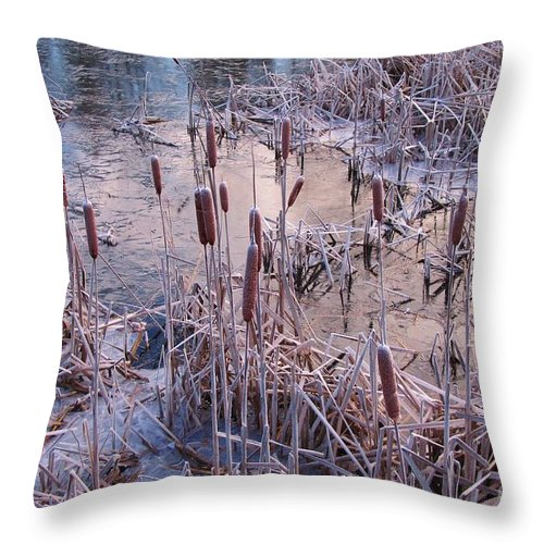 Winter Throw Pillow featuring the photograph Hardy Cat O Nine Tails by John Malone