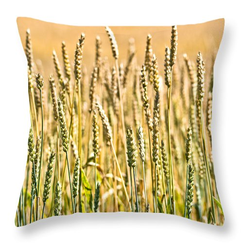 Wheat Throw Pillow featuring the photograph Harvest Time by Cheryl Baxter