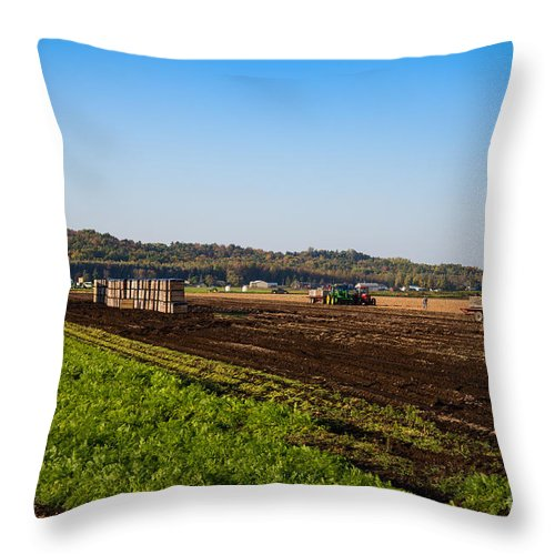 Farm Throw Pillow featuring the photograph Harvest Time In Holland Marsh Ontario by Les Palenik