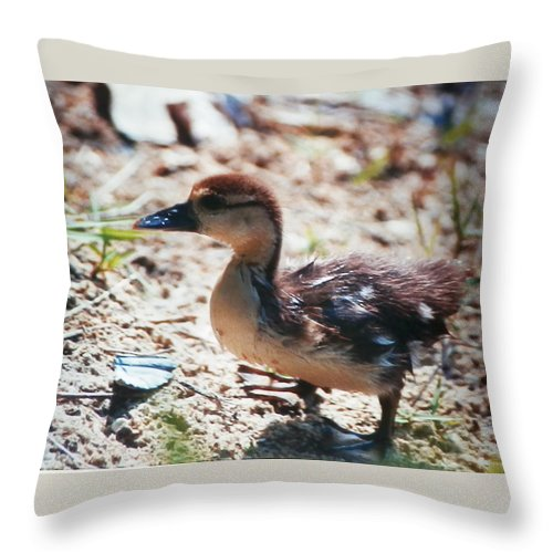 Baby Duckling Searching Out His Mother In Naples Throw Pillow featuring the photograph Lost Baby Duckling by Belinda Lee