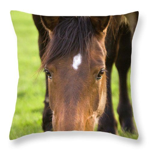 Horse Throw Pillow featuring the photograph Having A Lunch by Angel Ciesniarska