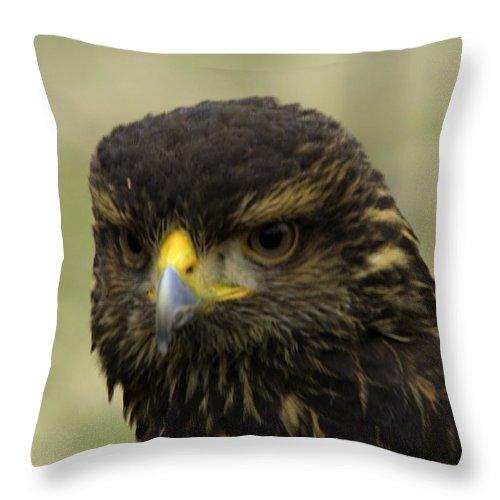 Abird Throw Pillow featuring the photograph Hawk 1 by John Straton