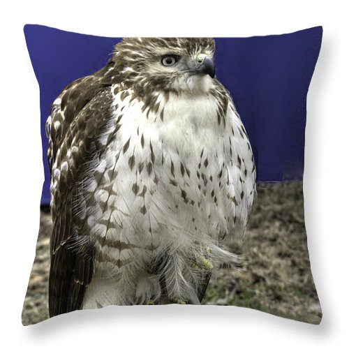 Abird Throw Pillow featuring the photograph Hawk 3 by John Straton