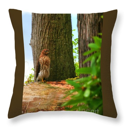 Hawk Throw Pillow featuring the photograph Hawk Eyes by Tap On Photo