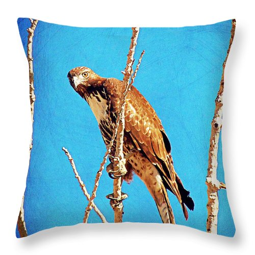 Acrylic Prints Throw Pillow featuring the photograph Hawk In A Glow by Bobbee Rickard