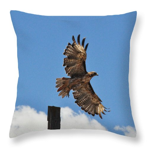 Hawk Throw Pillow featuring the photograph Hawk Launch by Debby Pueschel