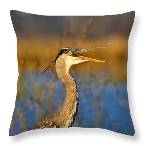 Great Blue Heron Throw Pillow featuring the photograph Hawking Heron by Al Powell Photography USA