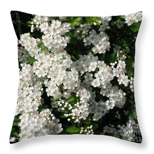 Hawthorn Throw Pillow featuring the photograph Hawthorn In Bloom by Ann Horn